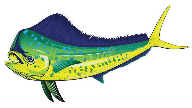 Mahi Stock Illustrations.