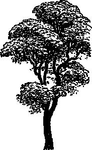 Tall Tree Clip Art at Clker.com.