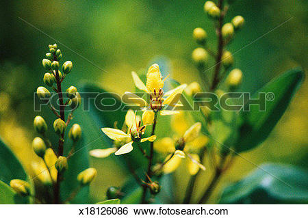 Stock Images of Cluster of yellow flowers x18126086.