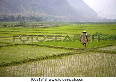 Pictures of Vietnam, Mai Chau, ricefields. f0031848.