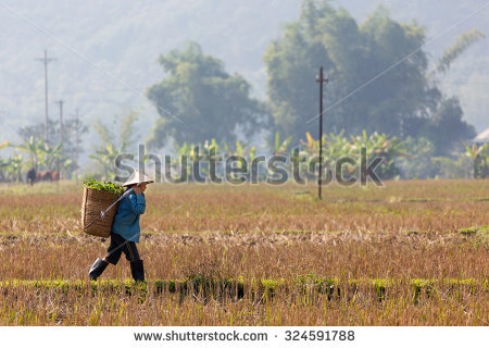 Mai Chau Stock Photos, Royalty.