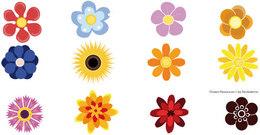 Hoa Mai Clip Art, Vector Hoa Mai.