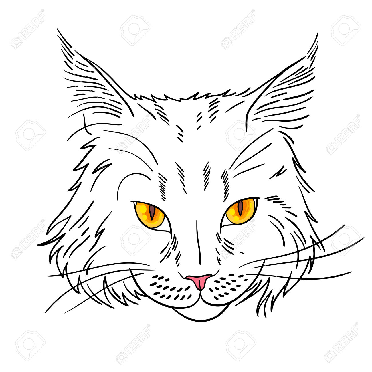 Maine Coon Cat Portrait. Hand Drawn Vector Illustration. Royalty.