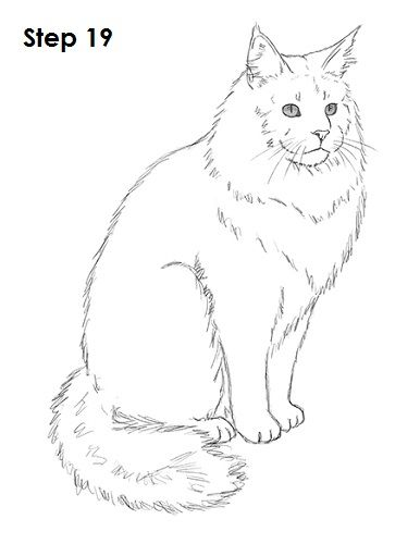Maine Coon Cat Drawing 19.