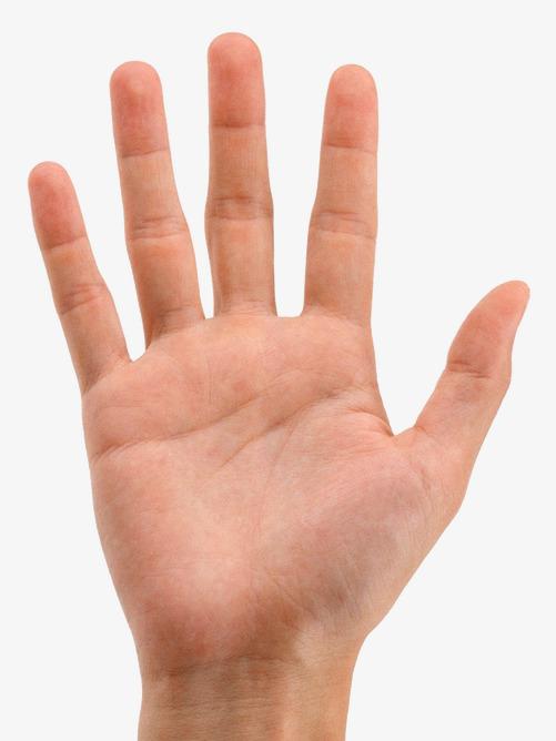 Les Cinq Doigts De La Paume De La Main, Cinq Doigts, La.