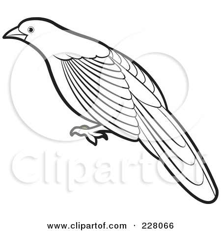 myna bird coloring pages - photo#22