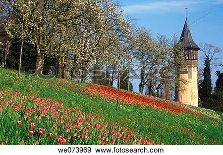 Stock Photograph of Garden Isle of Mainau, Meadow with Tulips.