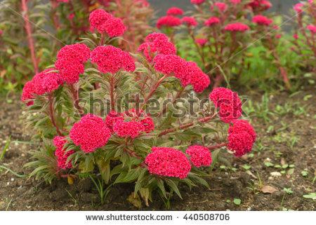 Flower Garden Mainau Island Bodensee Germany Stock Photo 70966315.