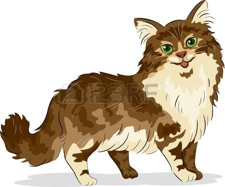 334 Maine Coon Stock Vector Illustration And Royalty Free Maine.