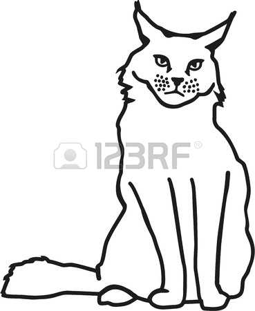304 Maine Coon Stock Vector Illustration And Royalty Free Maine.