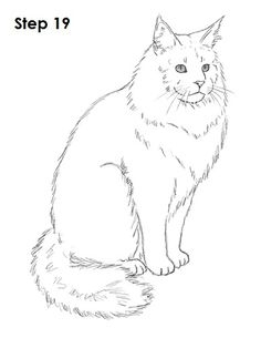 Maine Coon Cat Clipart.