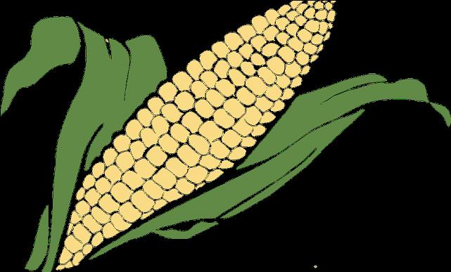 Grain Clipart Corn Grain.