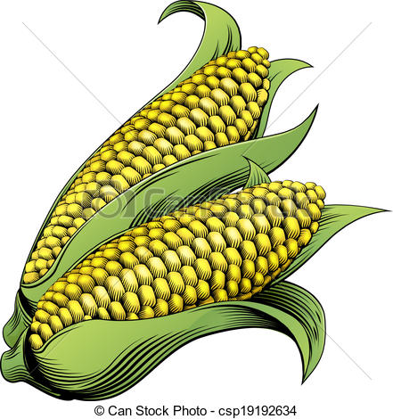 Ear maize Clipart Vector Graphics. 312 Ear maize EPS clip art.