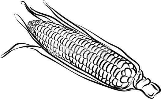 Maize clipart black and white.