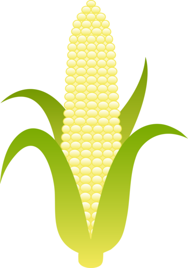 Maize cultivation clipart #16