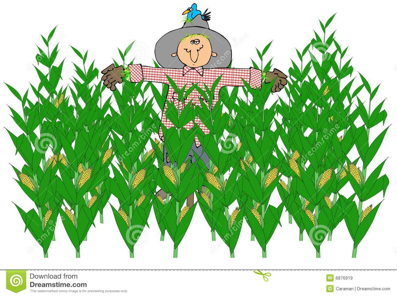 Corn Stalk Stock Illustrations.