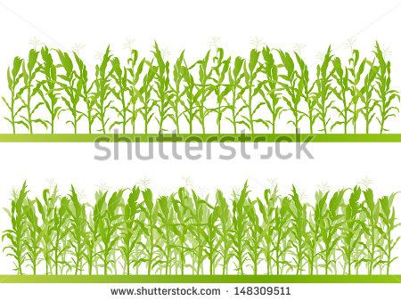 Maize field clipart #16