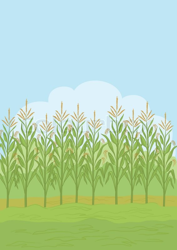 Maize field clipart #17