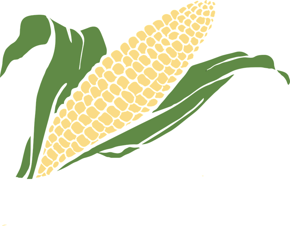 Maize grain clipart #12