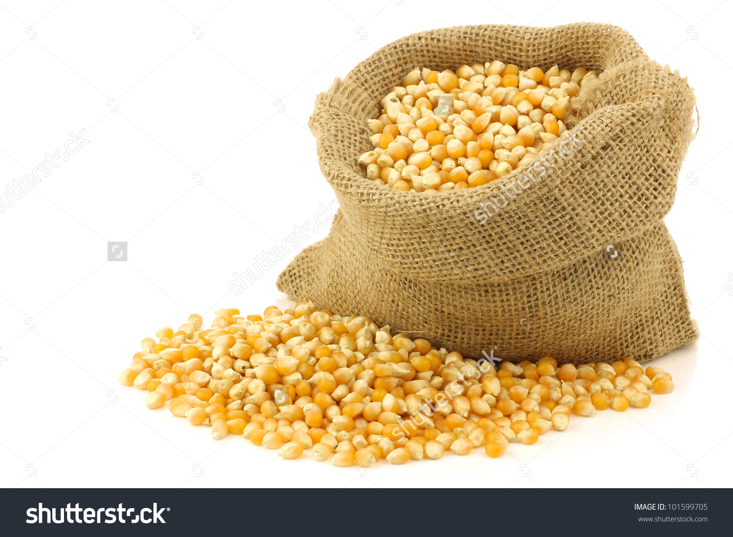 Yellow Corn Grain Burlap Bag On Stock Photo 101599705.
