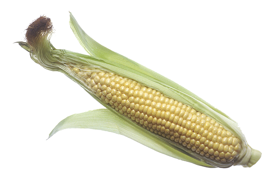 Corn (Maize) PNG Transparent Images.