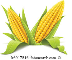 Maize types clipart #18