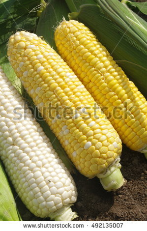 Type Of Corn Stock Photos, Royalty.