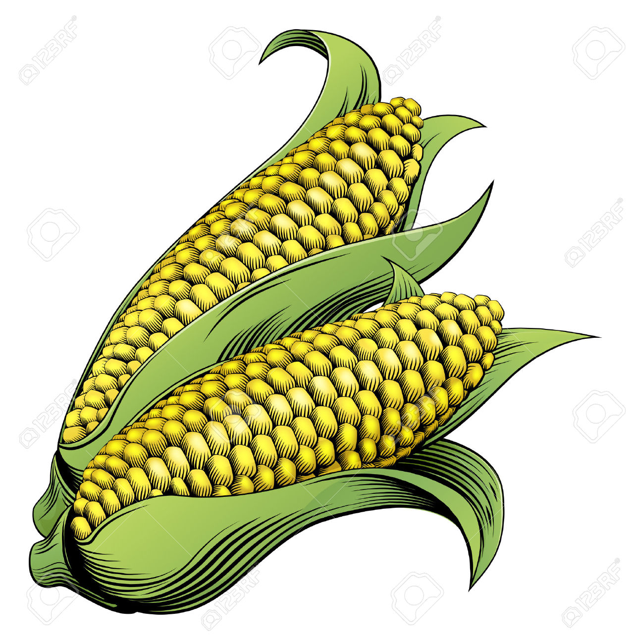 Maize Stock Photos Images. Royalty Free Maize Images And Pictures.