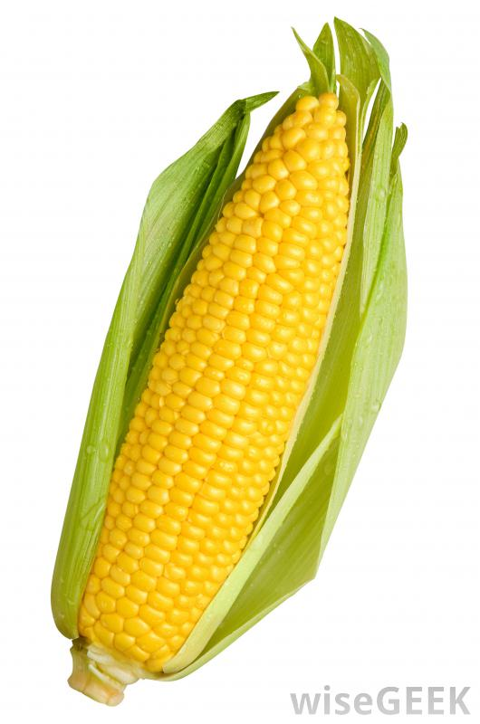 Maize types clipart #16
