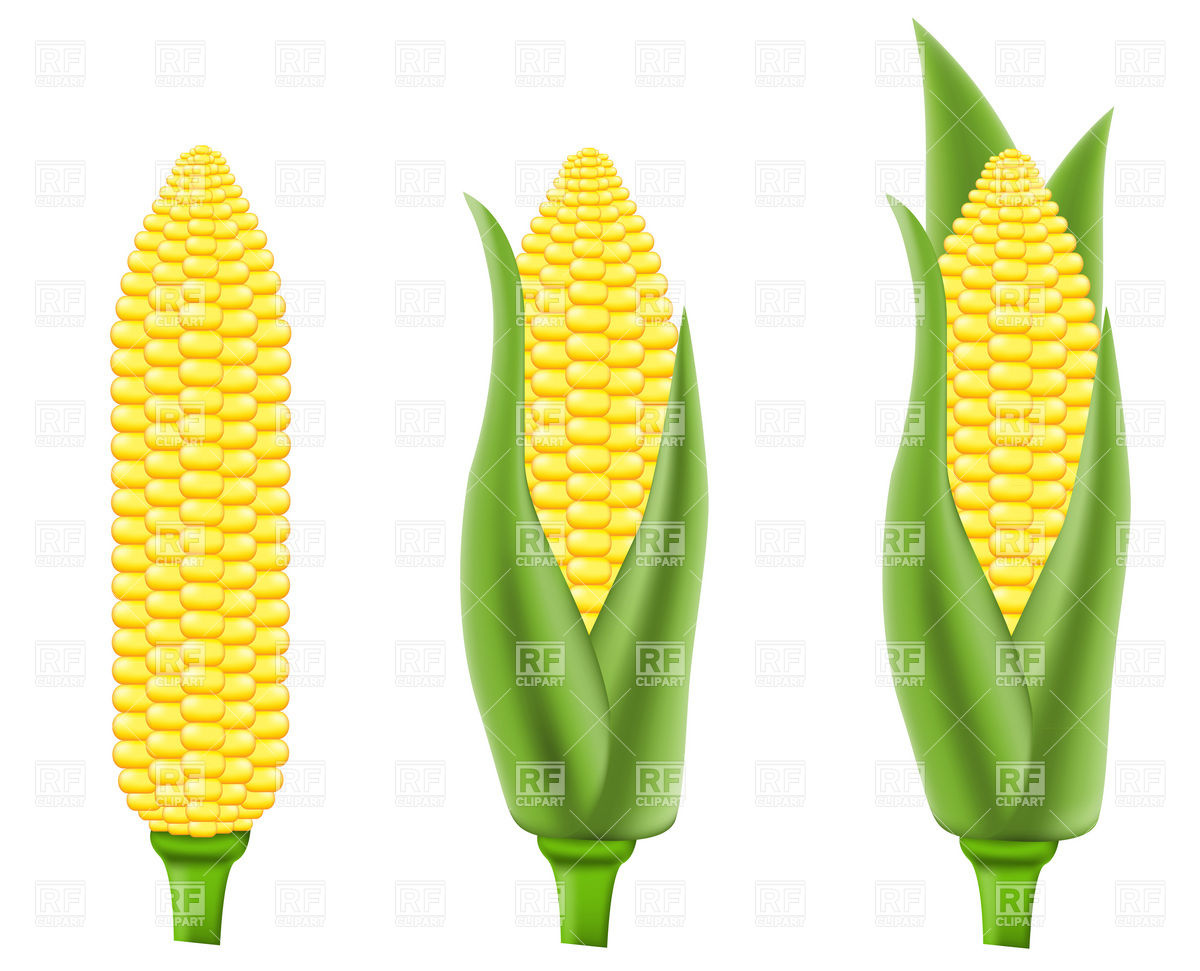 Corn (maize) Vector Image #19278.