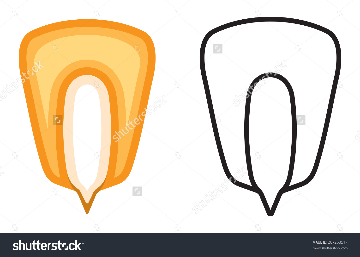 Corn Seed Vector Icon Stock Vector 267253517.