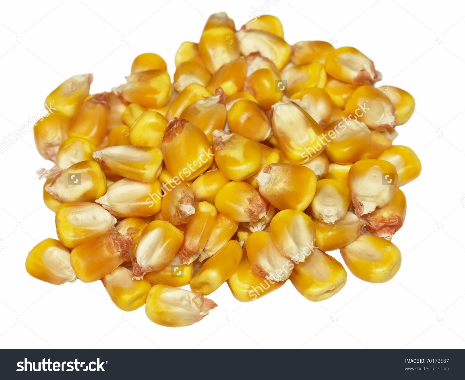 Maize variety clipart #10