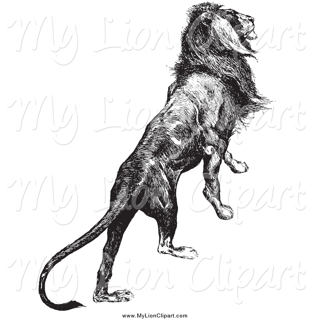 Clipart of a Majestic Lion Black and White by Picsburg.