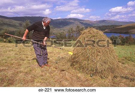 Stock Photography of Farmer Making Hay Stack Leenane Ireland eir.