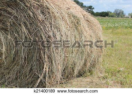 Stock Photograph of Making hay k21400189.
