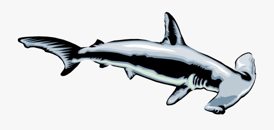 Vector Shark Mako.