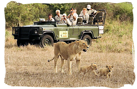 Why private game reserve safaris in South Africa are so unique..