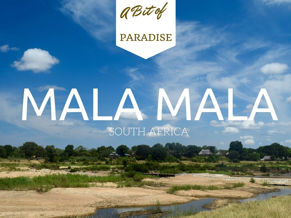 A Bit of Paradise: Mala Mala Game Reserve, South Africa.