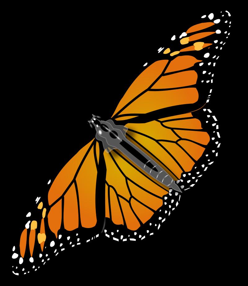 10 monarch butterfly clip art in Butterfly.