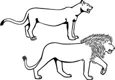 Male Lion Standing Side Stock Photos, Images, & Pictures.