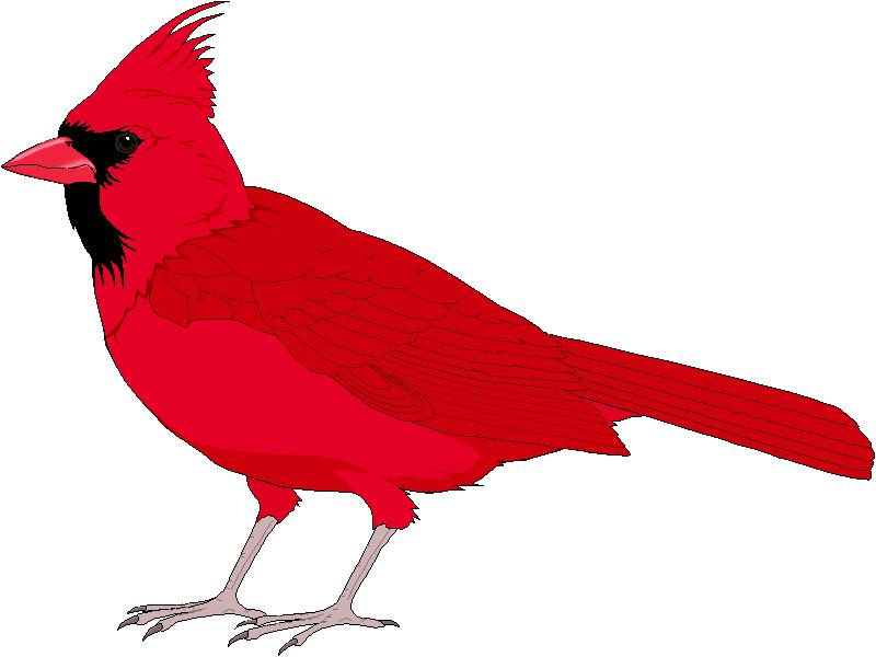 Red cardinal bird clip art.