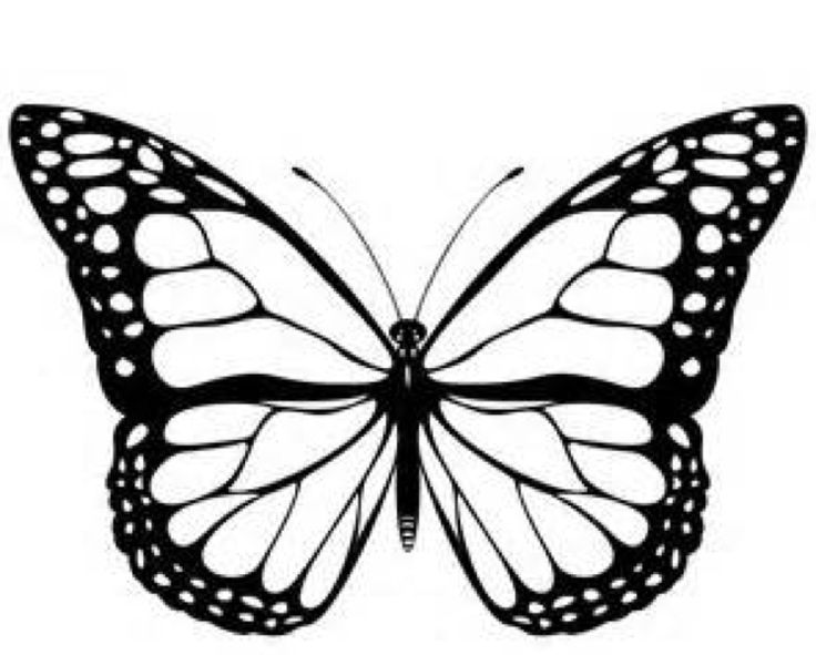 1000+ ideas about Monarch Butterfly on Pinterest.