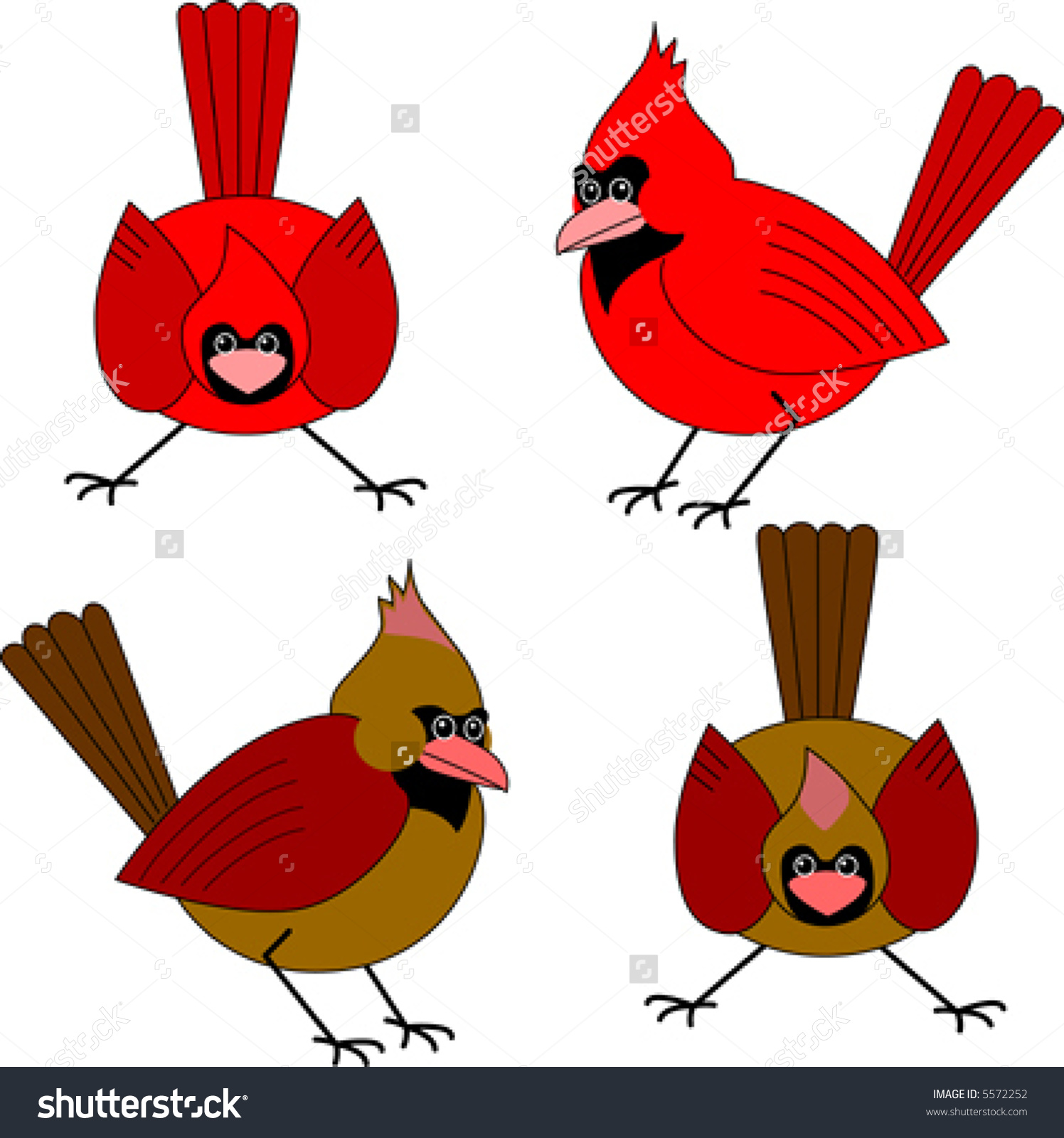 Vector Two Male Two Female Cardinals Stock Vector 5572252.