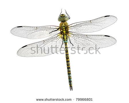 Dragonfly Isolated Stock Photos, Royalty.