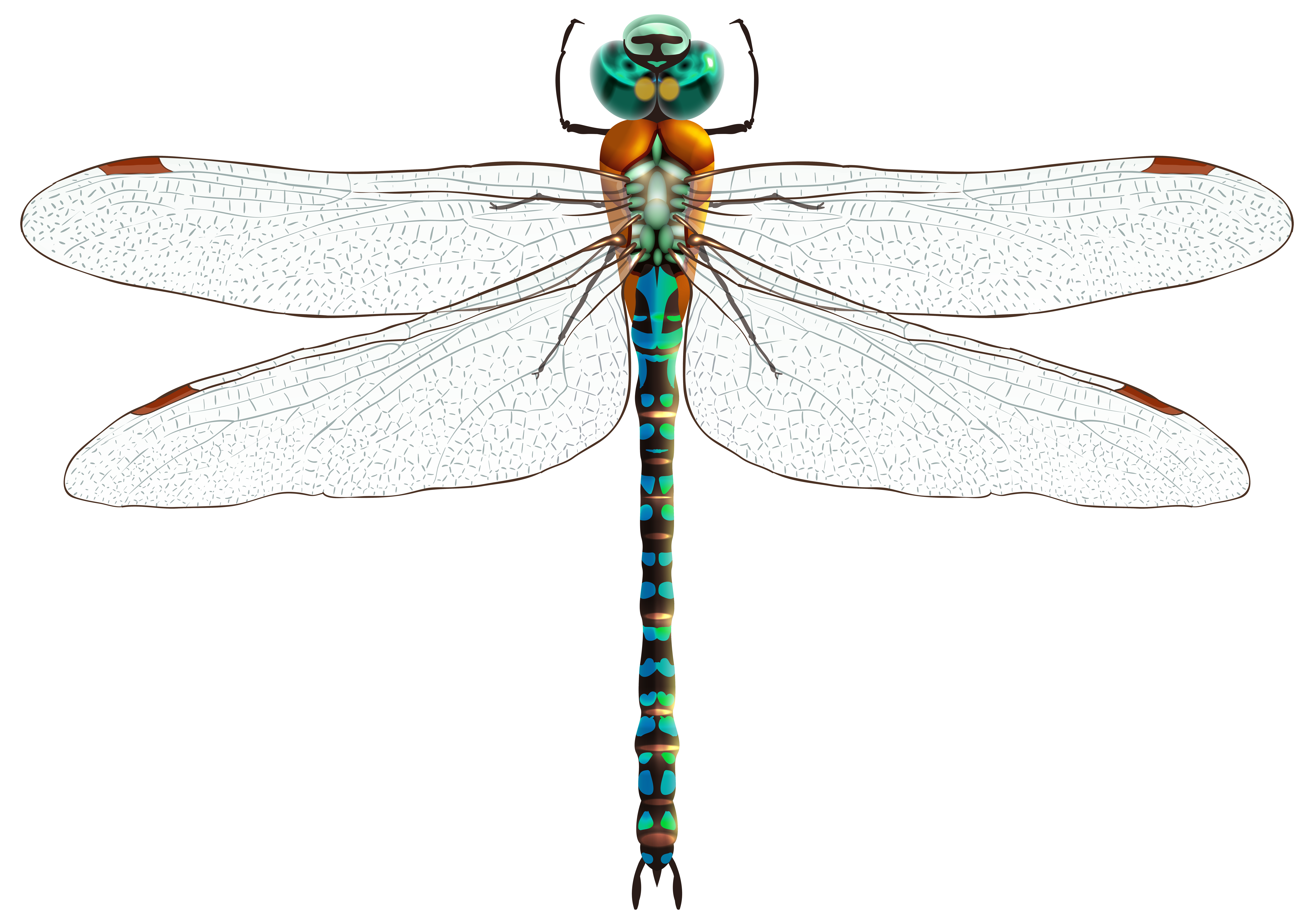 Dragonfly PNG Clip Art.