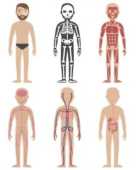 Body Vectors, Photos and PSD files.