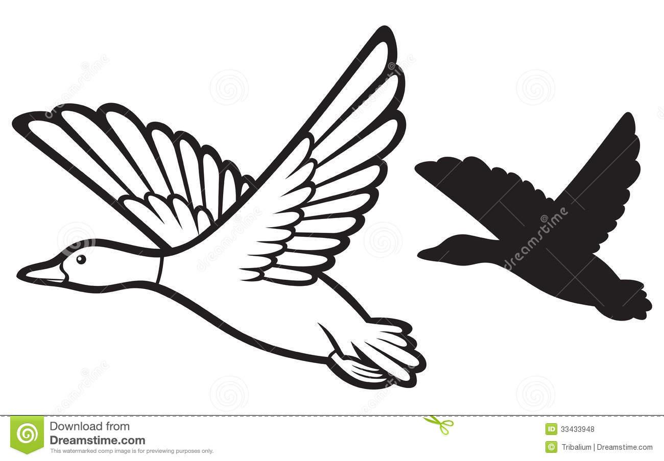 Free flying mallard duck clipart.