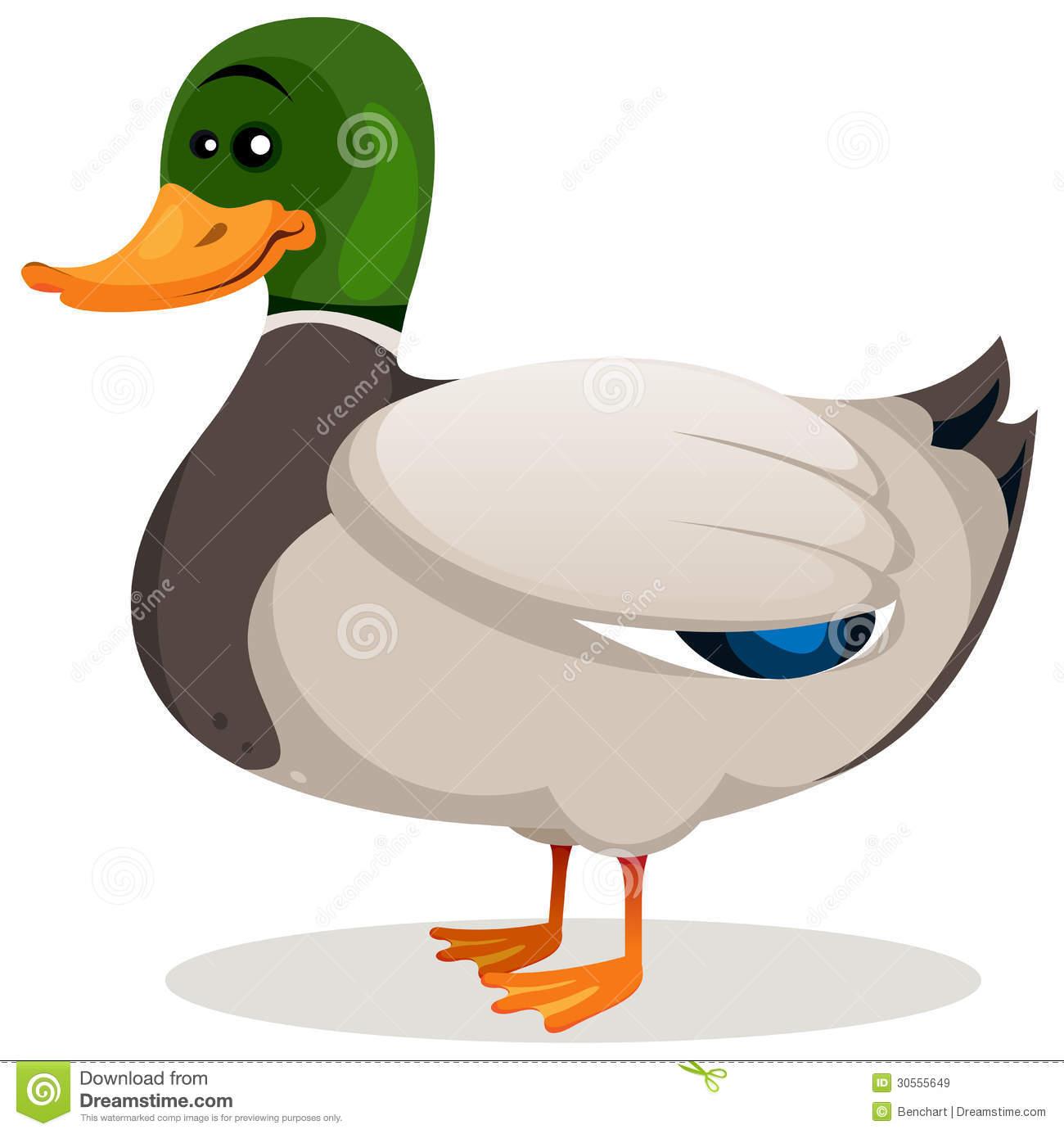 Mallard Duck Free Clipart.