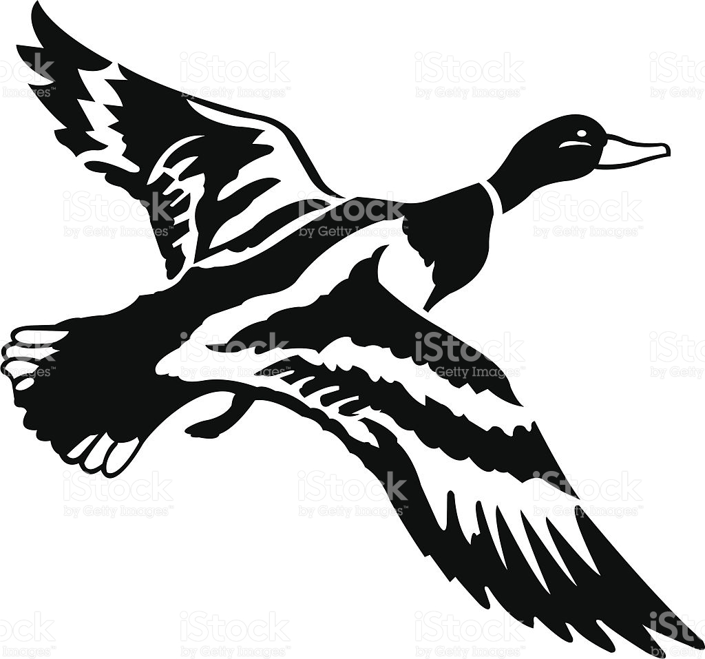 Collection of Mallard clipart.