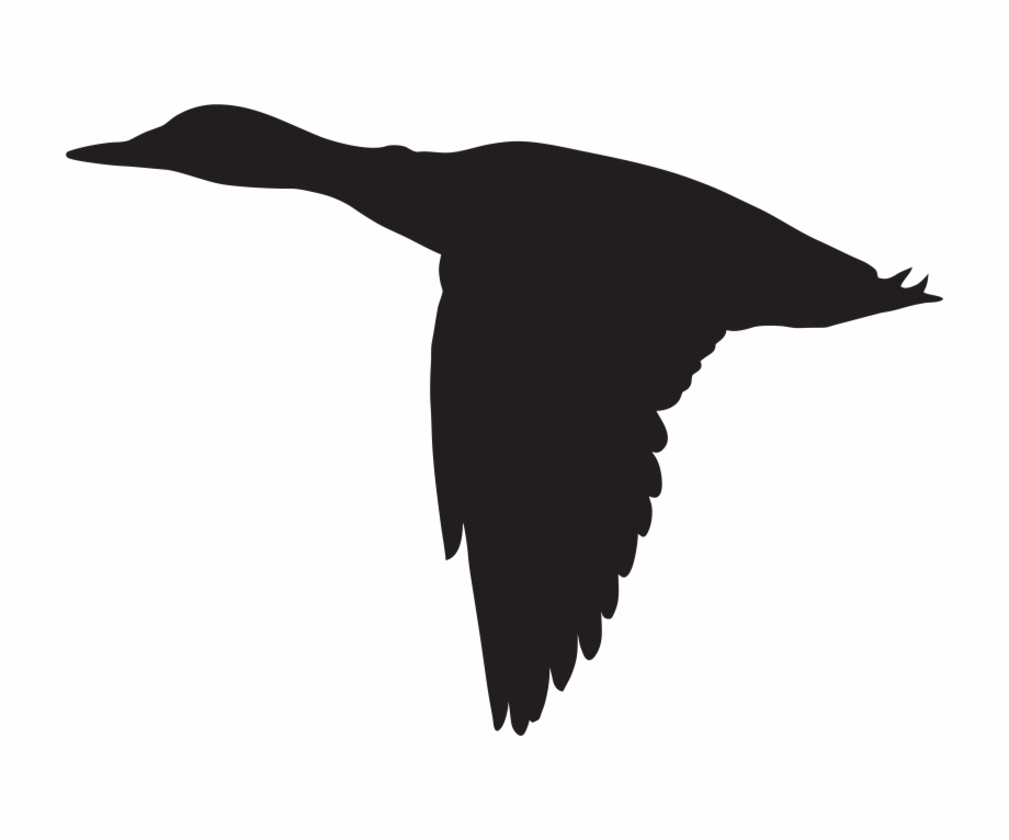 Duck Flying Silhouette Png Clip Art Image Ⓒ Free PNG Images.
